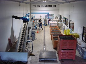 The York Olive Oil Co olive press