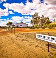 York Olive Oil Co
