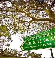 This way for fresh Extra Virgin Olive Oil from WA