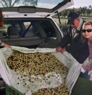 A boot full of olives