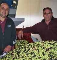 Customers helping wash their olives